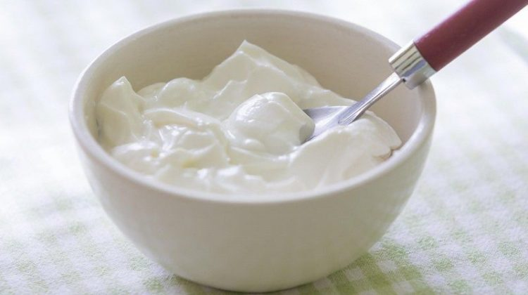 Yogurt-gidahatti